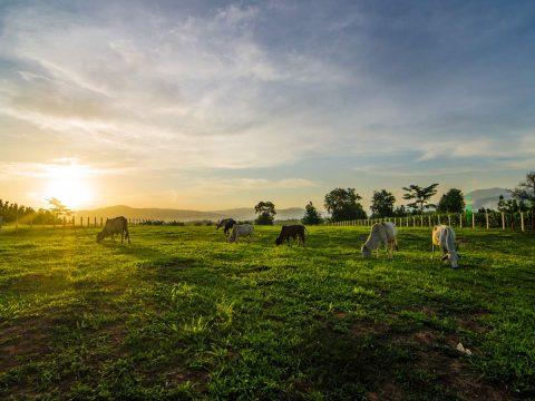 Global Tanks Hobby Farming in Australia