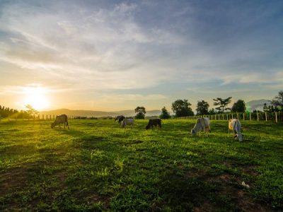 Hobby Farming in Australia
