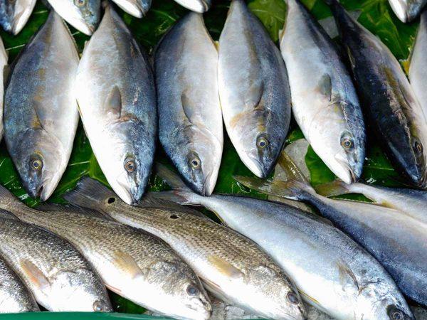 aquaculture australia
