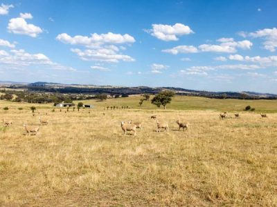 A Guide to Grazing Crops for Extra Winter Feed in Queensland