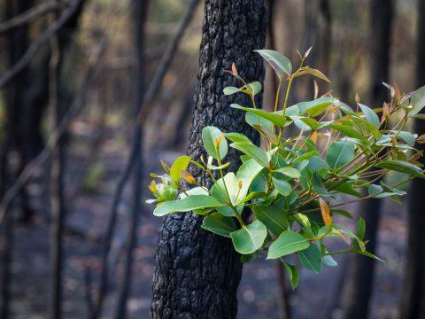 New Plant On Burnt Tree