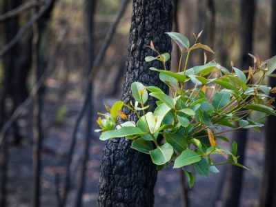 Get Ready for Bushfire Season with a Water Storage Tank