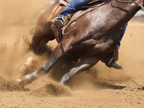 Horse Makes Sharp Turn In Dirt