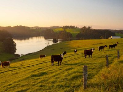 Megatrends Shaping Australian Agriculture