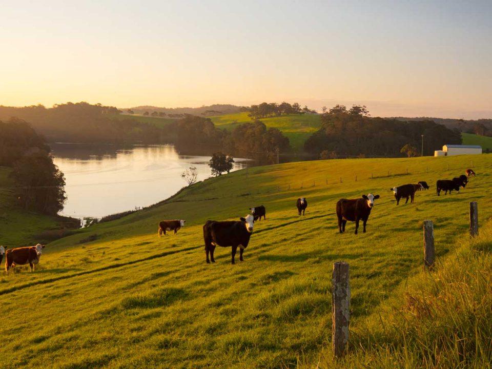 Australian farm, megetrends shaping Australian agriculture