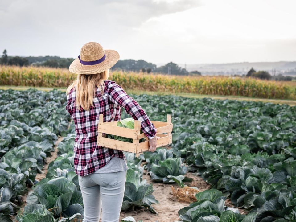 THUMBNAIL-Advertising-For-Agricultural-Seasonal-Workers