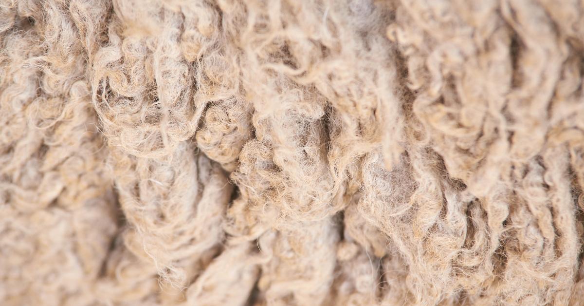 """alt=""""sheep wool close up"""""""