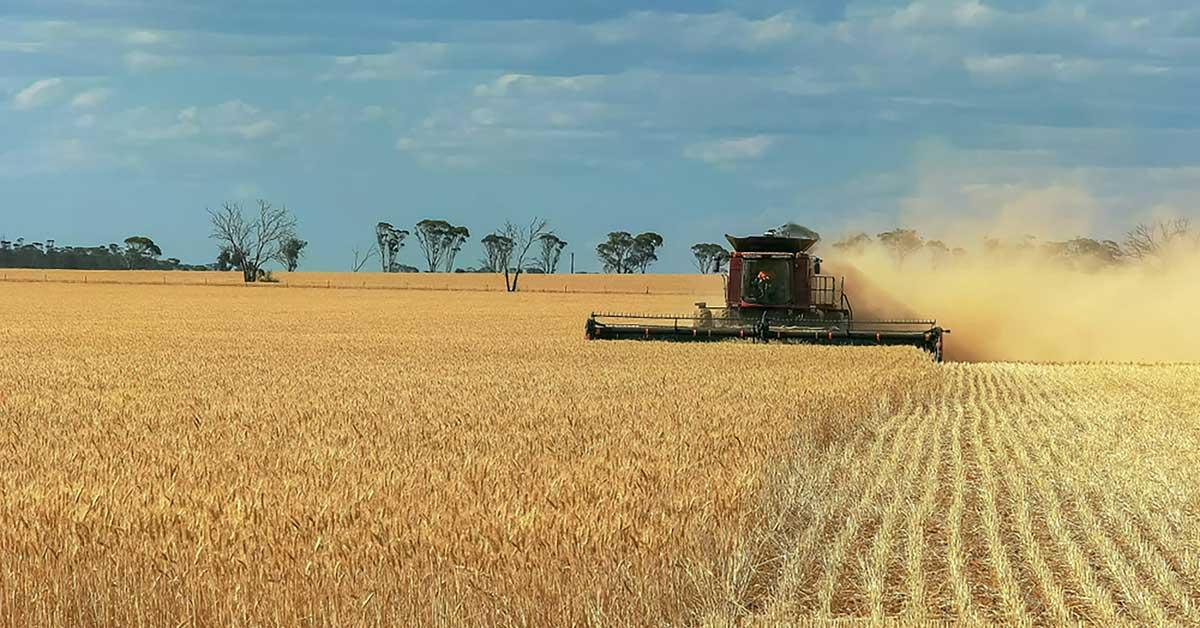 farm crop yield, mouse plague australia, global rotomoulding