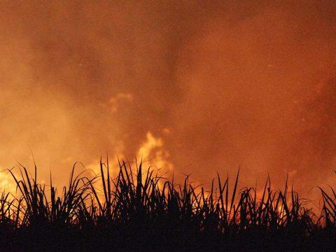 mouse plague australia, global rotomoulding, burning crops