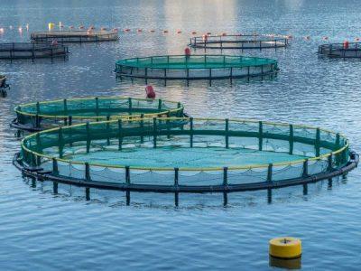 Australian Aquaculture – Benefits, Cons & Processes