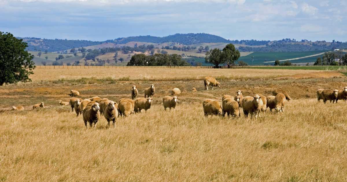 pasture grazing, global tanks